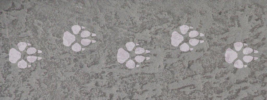 Wolfspfoten